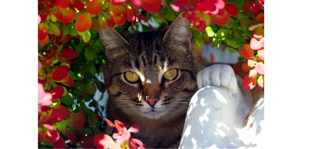 kot bawi się w kwiatach