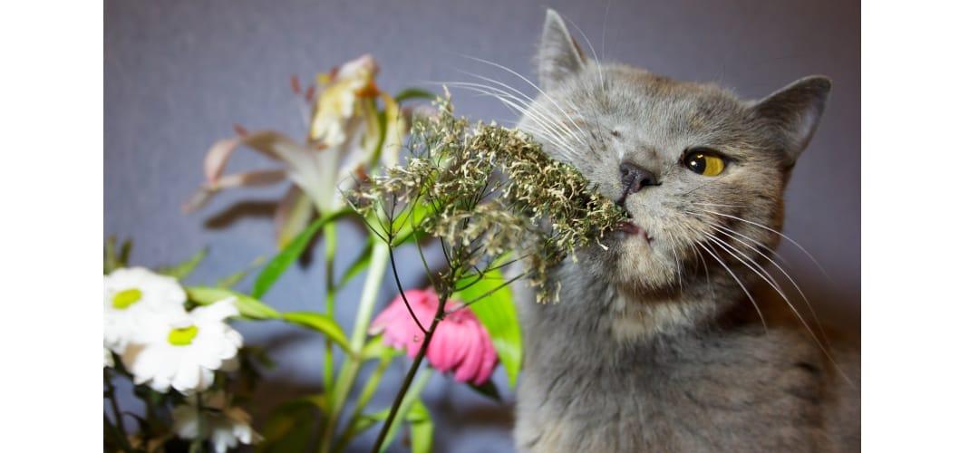 kot gryzie kwiaty
