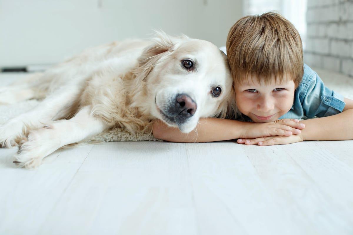 golden retriever i dziecko na podłodze