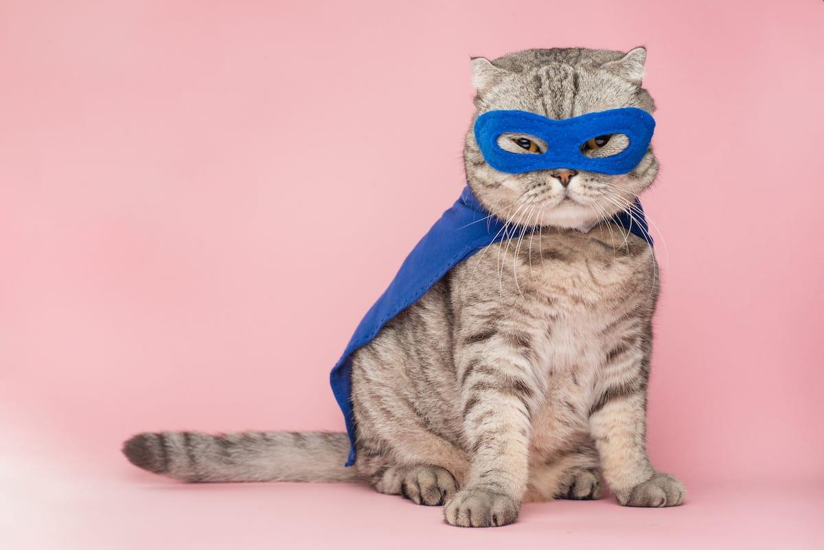 zarobaczony kot